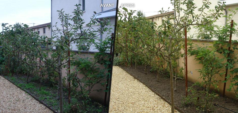 Gingko saibo blog archive entretien jardin for Entretien jardin granville